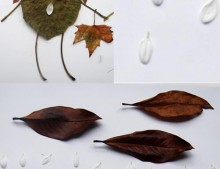 con unas hojas