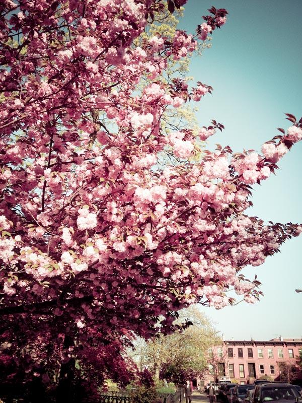 flores brooklyn