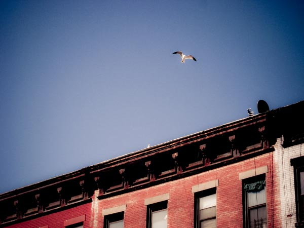 gaviota brooklyn