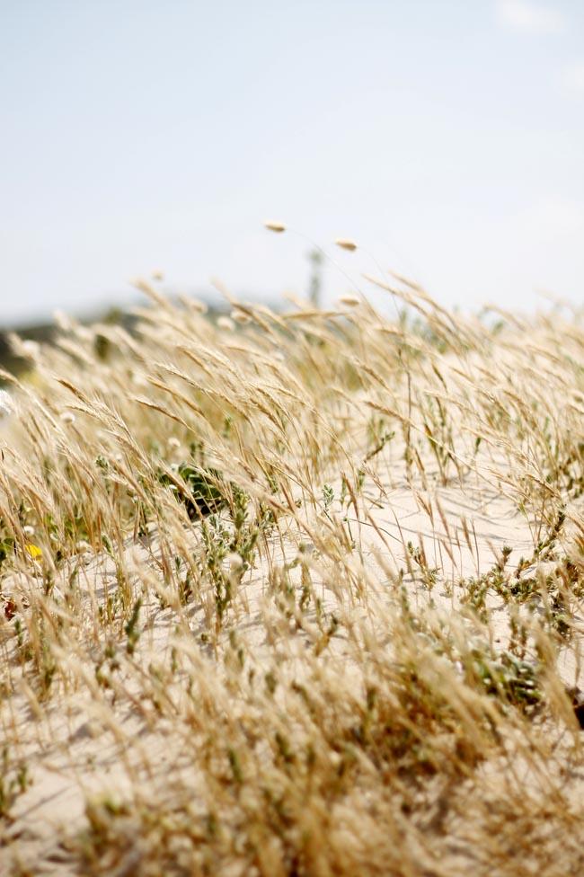 playa de xago 12