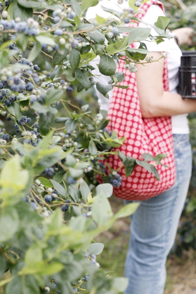 el malain asturias recoger fruta