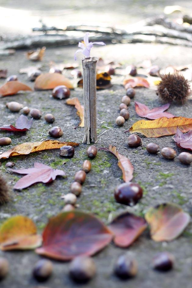Hacemos un taller de mandalas en el bosque escondido? | Escarabajos ...