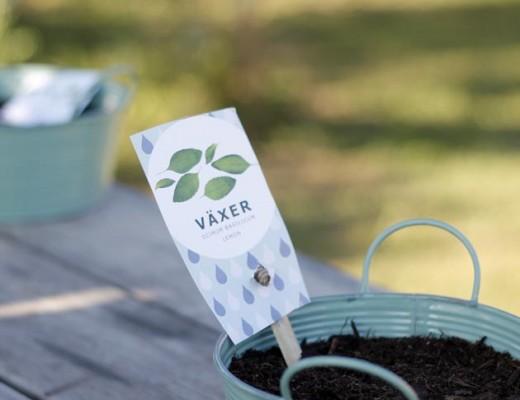 plantar cilantro4