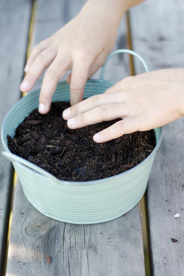 plantar cilantro5