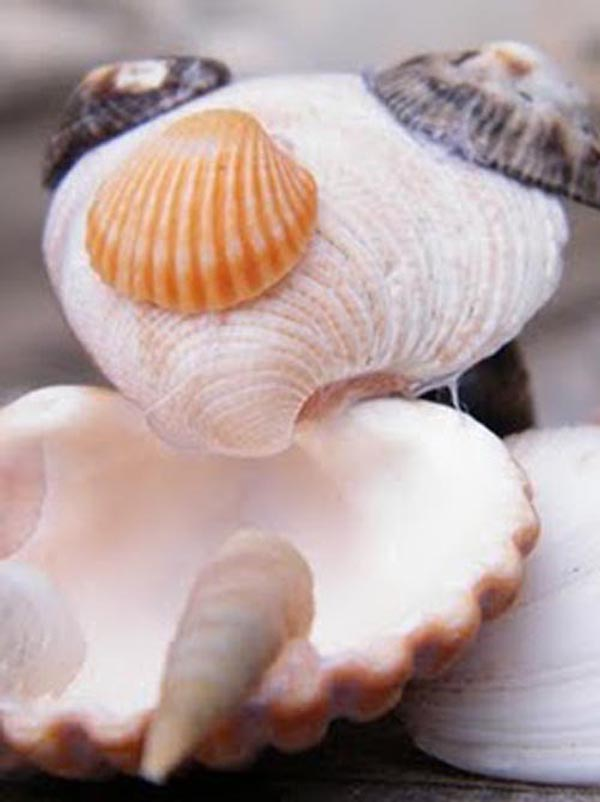 conchas-marta