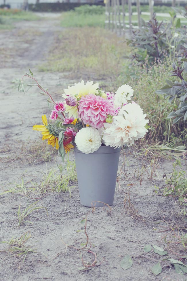 recoger flores6