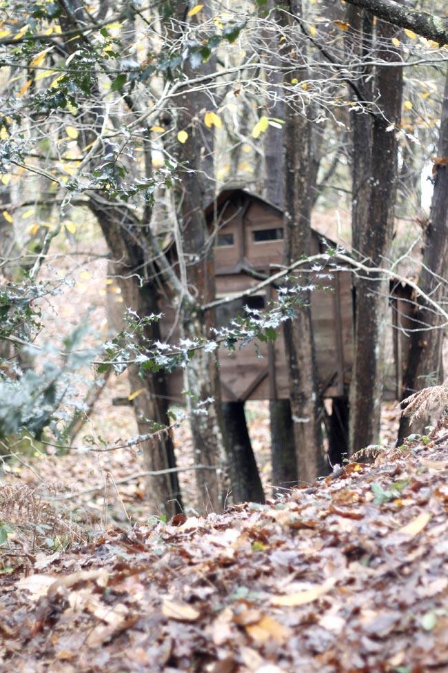 casita en el arbol